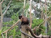 091214_Noby5_monkey.jpg