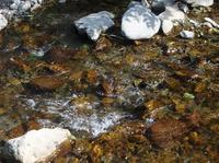 101014_9_Noby_creek.jpg
