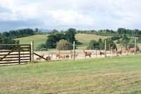 101206_1_Rolly_farm.jpg