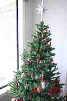 101220_1_Rolly_tree.jpg