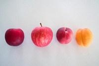 110210_2_Rolly_Fruits.jpg