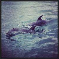 140728_02_Rin_dolphin.JPG