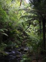150113_06_Rin_NZ.JPG