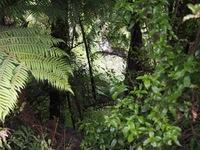 150209_04_Rin_NZ.JPG