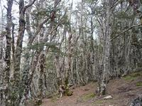 20101101_5_Noby_forest.jpg