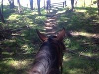 20140331_02_Rin_horse.JPG
