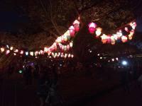 20160225 2 サリー chiniese new year.jpg