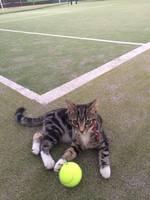 20160502 1 サリー tennis.jpg