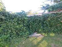 20210329_1_kapotto_garden.jpg