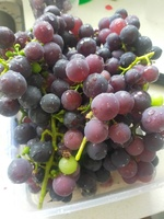 20210329_3_kapotto_Grape.jpg