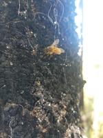 20211011_2_kapotto_Honey fungi.jpg